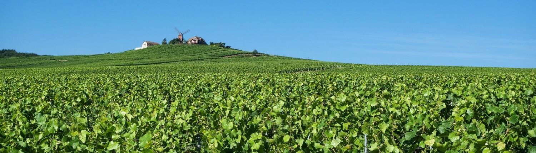 Champagne Reims druivenranken wijn landschap