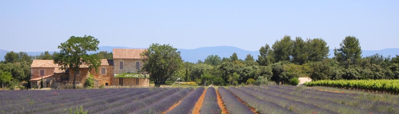 Lavendelveld Provence Frankrijk