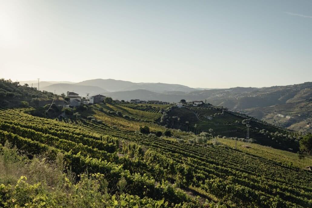De wijnterrassen in de Douro vallei